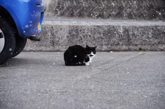 田川市石炭・歴史博物館のネコ