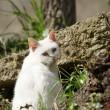 丸山公園の猫