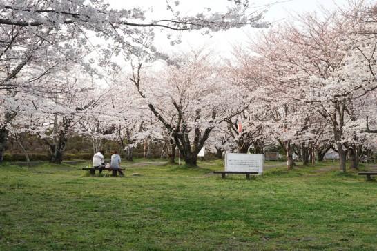 田川市丸山公園