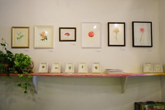 マサジアートギャラリー水彩植物画展  田川高校36