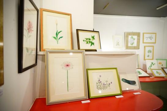 水彩植物画展  田川高校36