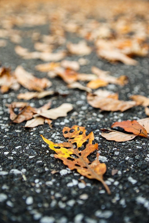 成道寺公園の落ち葉