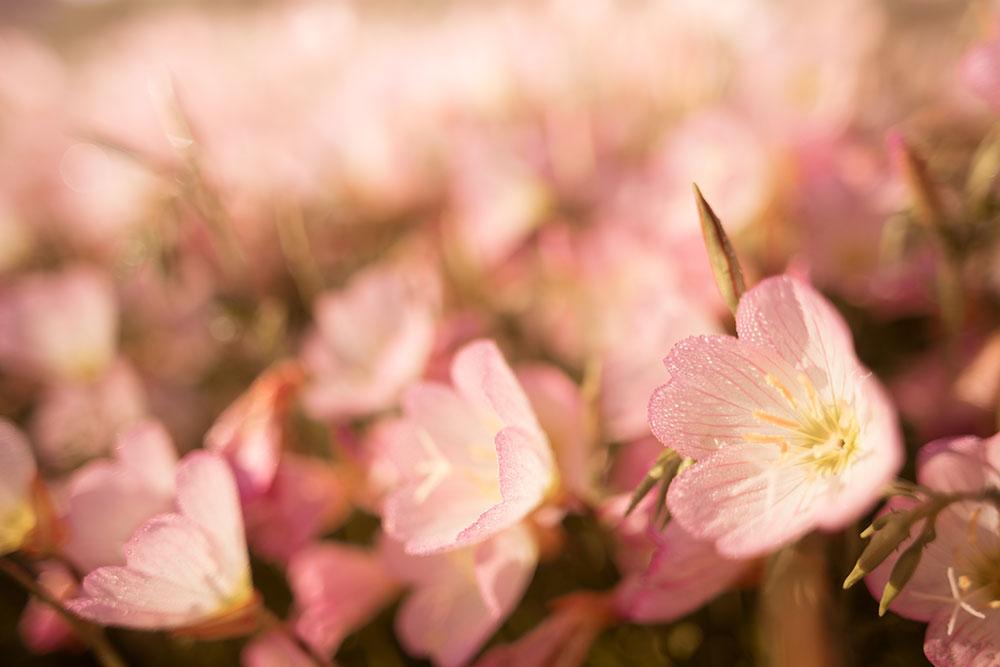 花々-1000px